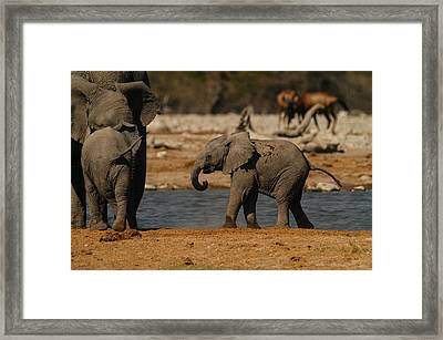 Start The Dance Framed Print