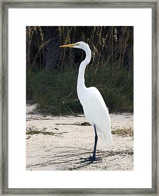 Stately Egret Framed Print by Sally Weigand