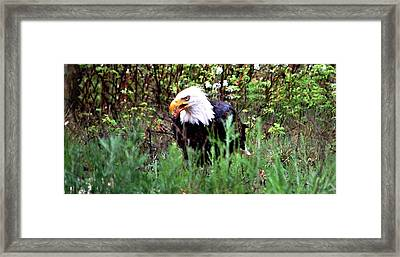 Stay Away From My Dinner Framed Print by Don Mann