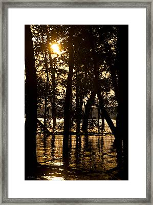 Stay Gold Framed Print by Straublund Photography