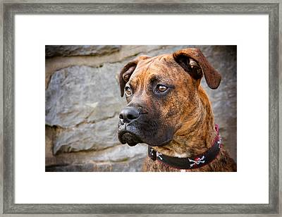 Steady Framed Print