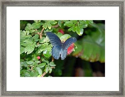 Stealthy Red Framed Print