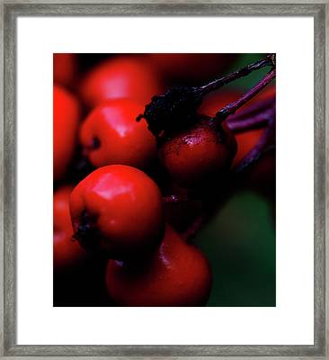 Steamboat Springs Berries Framed Print