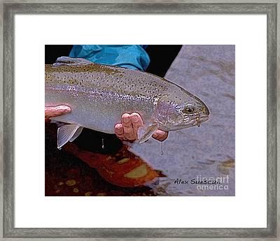 Steelhead On Dry Fly Framed Print by Alex Suescun