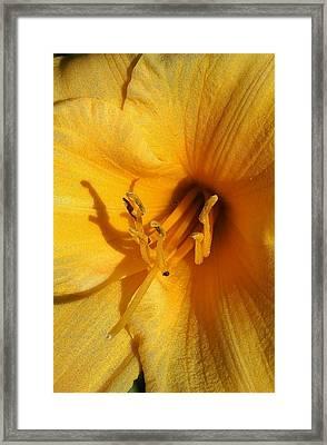 Stella Dora Liliy Close Up Framed Print by Bruce Bley