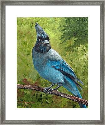 Stellar Jay Framed Print by Dee Carpenter