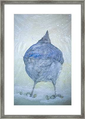 Stellar Jay From  Back Framed Print by Debbi Saccomanno Chan