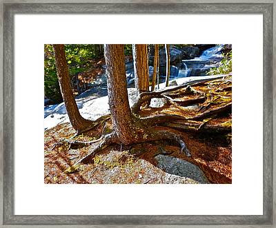 Step Falls Roots Framed Print by George Ramos
