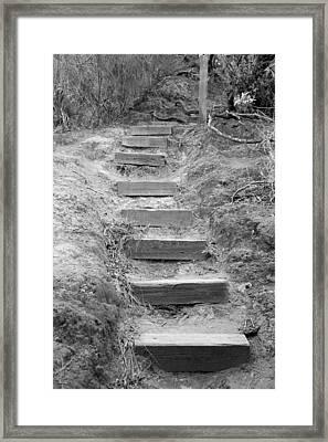 Steps  Framed Print by Elizabeth  Doran