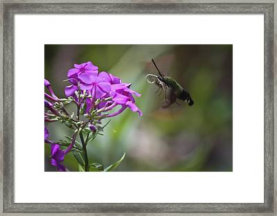 Stick Out Your Tongue Framed Print by Teresa Mucha