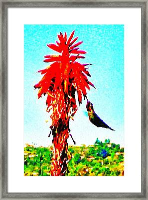 Stickybeaking Hummingbird Framed Print by Brian D Meredith