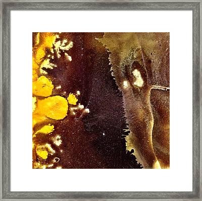 Stigma Framed Print