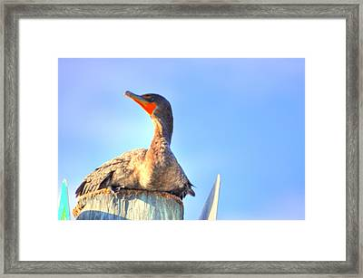 Still Framed Print by Barry R Jones Jr