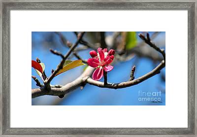 Still Here... Framed Print by Milena Ilieva