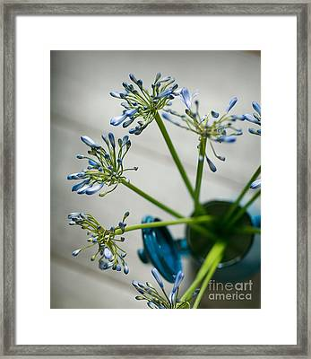 Still Life 01 Framed Print by Nailia Schwarz