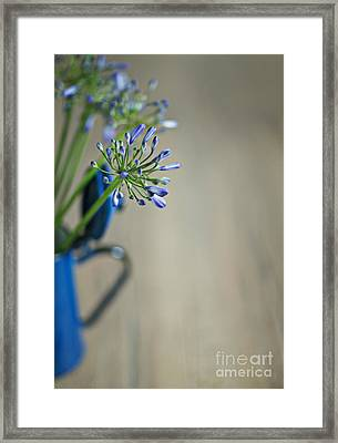 Still Life 02 Framed Print