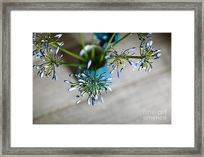Still Life 04 Framed Print by Nailia Schwarz
