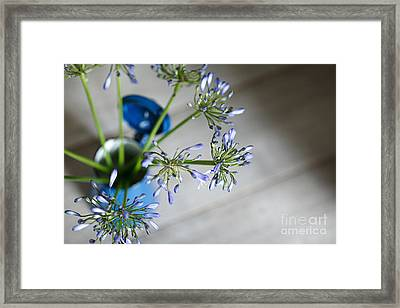 Still Life 05 Framed Print