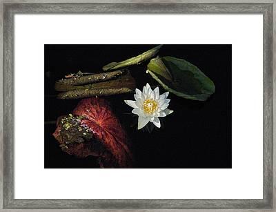 Still Life Framed Print by Joseph Yarbrough