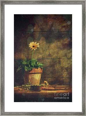 Still Life Of Yellow Gerbera Daisy In Clay Pot Framed Print by Sandra Cunningham