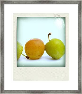 Still Life With Plums. Framed Print by Bernard Jaubert