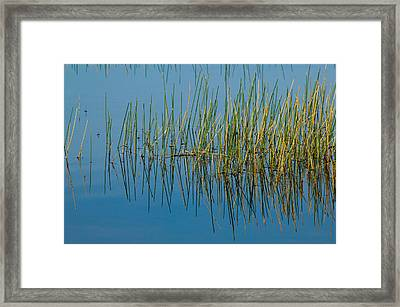 Still Water And Grasses Framed Print by Rich Franco
