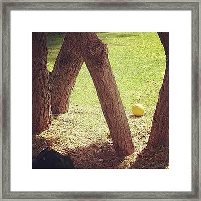 #stilllife #still #life #nature #orange Framed Print by Anna Valencia