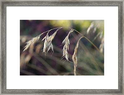 Stillness In The Wind Framed Print by Terrie Taylor