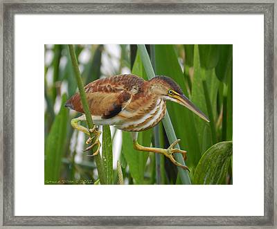 Stilt View Framed Print