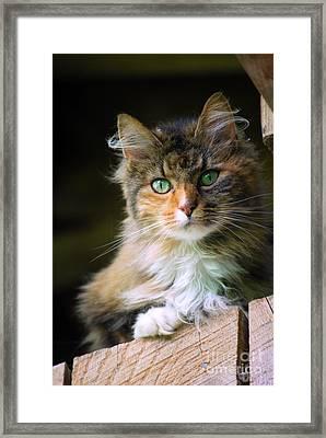Stinks Barn Cat Framed Print