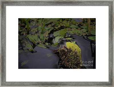 Stirring The Swamp Pot Framed Print by The Stone Age