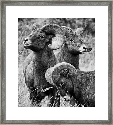 Stoic Horns Framed Print by Kevin Munro
