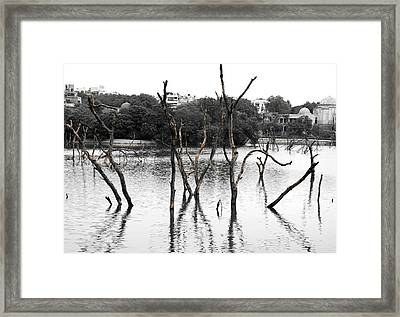 Stomps Of Trees In A Lake Framed Print