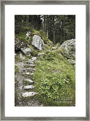 Stone Steps On Forest Path Framed Print