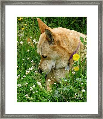 Stop And Smell The Clover Framed Print