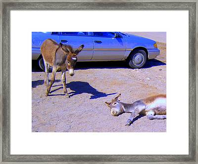 Stop Don't Feed Me Or I Will Get A Belly Ache Framed Print