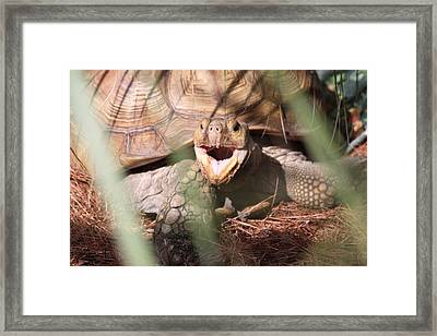 Stop Taking My Picture Framed Print by Jeanne Andrews