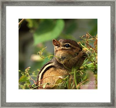 Storing Up For Winter Framed Print
