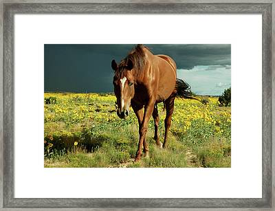Storm Horse Framed Print by photo © Jennifer Esperanza