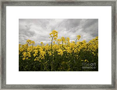 Storm In Sight Framed Print
