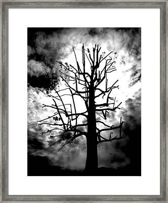 Storm Tree Framed Print