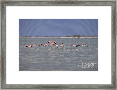 Stormy Day Flock Framed Print by Alex Suescun