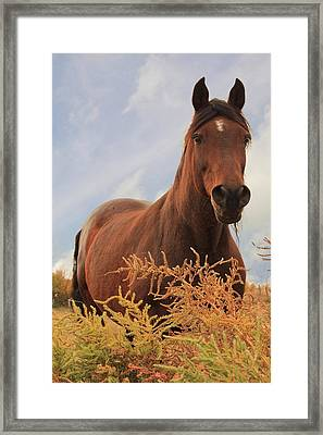 Stormy Framed Print by Jim Sauchyn