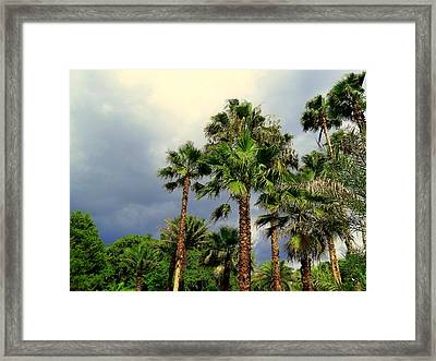Stormy Skies And Palms Framed Print by Sheri McLeroy