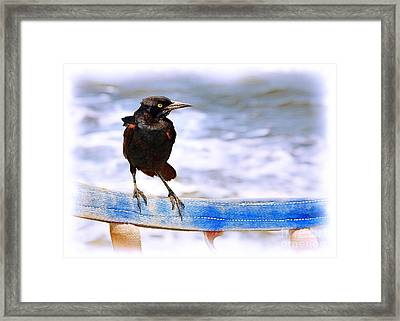 Stowaway On The Ferry Framed Print by Judi Bagwell
