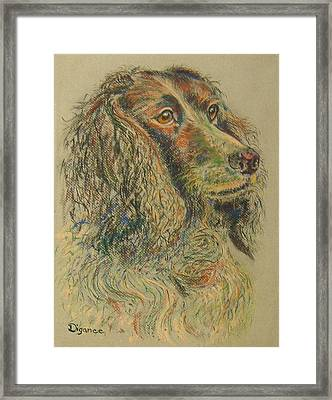 Straight From The Field - Spaniel Portrait Framed Print by Richard James Digance