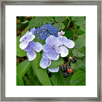 Framed Print featuring the photograph Strange Bedfellows by Cheri Randolph