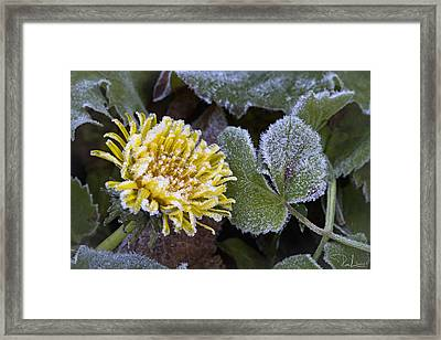 Framed Print featuring the photograph Strange Seasons by Raffaella Lunelli