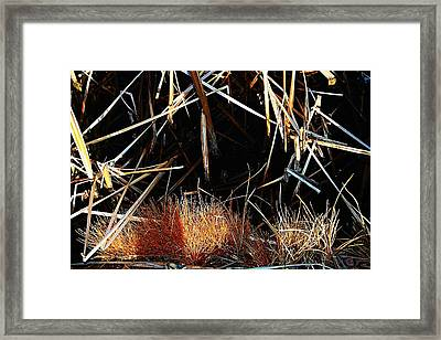 Straw Framed Print by Susana Sanchez Giraud
