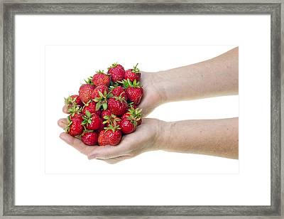 Strawberries In Hands Framed Print